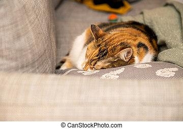 mignon, chat endormi, divan, vue, oreiller, litfront, cle