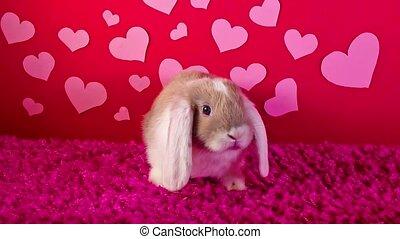 mignon, concept, aimez coeur, chouchou, valentines, s, rue, day., tailler, animal, valentin, aimer