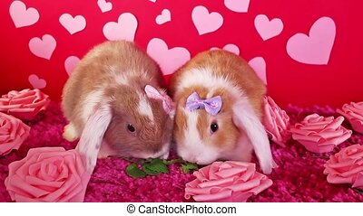 mignon, concept, animaux, lapin, animal, chouchou, valentines, s, valentin, tailler, animaux familiers, jour