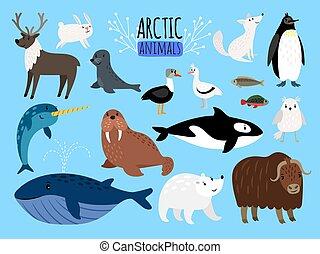 mignon, ensemble, polaire, arctique, alaska, illustration, animals., education, vecteur, ours, animal, ou, manchots