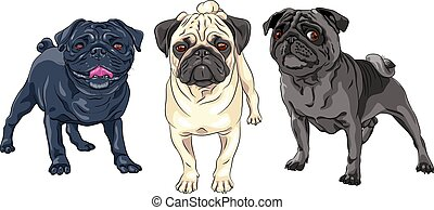 mignon, ensemble, race, vecteur, chien, carlin
