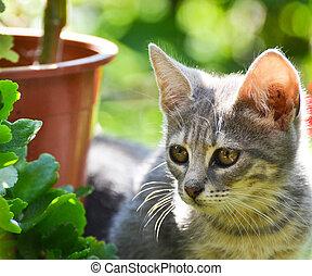 mignon, jardin, chaton
