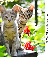 mignon, jardin, chatons