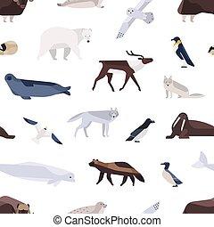 mignon, marin, faune, illustration., vecteur, polaire, oiseaux, plat, mammifères, animaux, seamless, différent, habitant, arctique, fond, dessin animé, blanc, coloré, antarctique, pattern., nord, divers