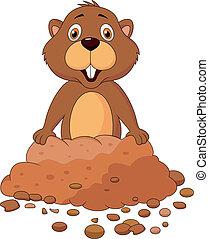 mignon, marmotte amérique, dessin animé