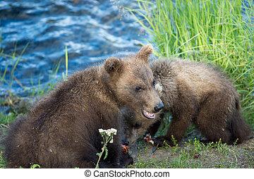 mignon, petits, ours, brun