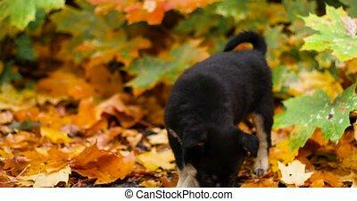 mignon, portrait, forêt, noir, feuilles, appareil photo, chiot, métis, automne, regarder