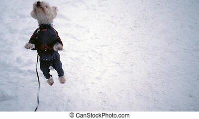 mignon, sauter, chien, neige