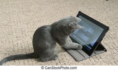 mignon, tablette, selfie, numérique, jouer, informatique, chaton, prendre