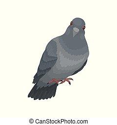 mignon, urbain, pigeon, gris, vecteur, fond, illustrations, blanc