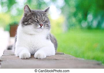mignon, vie, sien, chat, outdoors., apprécier