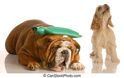 migraine, chien, obtenir