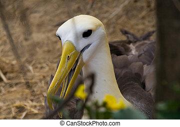 mis danger, albatros