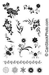 modèle, fleur, plante