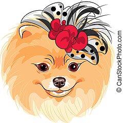 mode, pomeranian, race, chien, vecteur, sourire