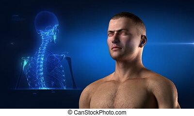 monde médical, squelette, vue