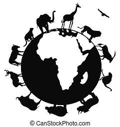 mondiale, afrique, autour de, animal