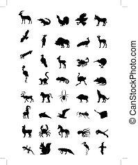 mondiale, animal