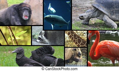 montage, 2, animal