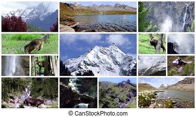 montage, faune, alpin