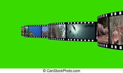 montage, métrage, vie sauvage
