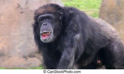 montage, primat