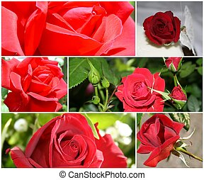 montage, roses, rouges