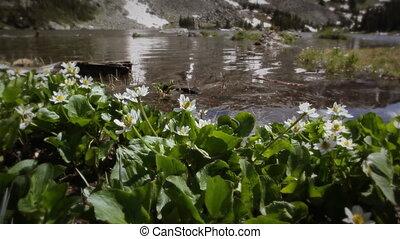 montagne, (1207), ruisseau, wildflowers