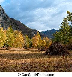 montagne, automnal, paysage, forêt