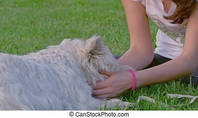 montagne blanche occidentale terrier, jouer