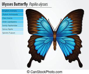 montagne bleue, swallowtail