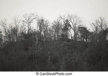 montagne, branches, arbre