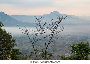montagne, brume, arbre, fond, mort