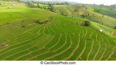 montagne, champ, agriculture, riz, land., terrasse