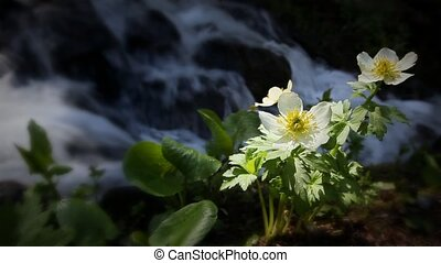 montagne, chute eau, (1202, wildflower