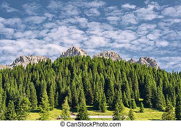 montagne, forêt verte, paysage, scénique