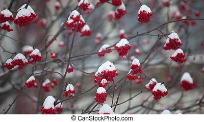 montagne, neige, tas, couvert, cendre, rouges