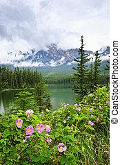 montagne, parc national, lac, roses, jaspe, sauvage