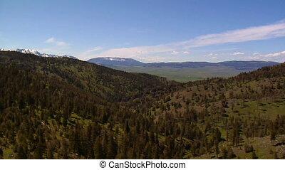 montagne, prise vue aérienne, arbres pin