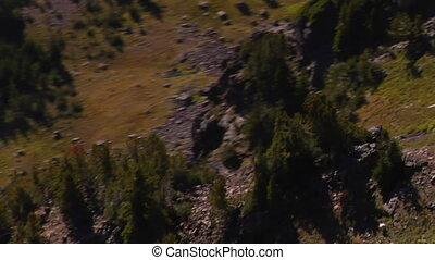 montagne, prise vue aérienne, chèvre, troupeau