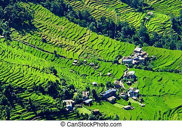 montagne, randonnée, camp, champs, népal, annapurna, paysage, vert, base, riz, rivière