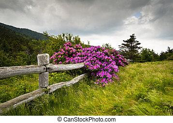 montagne, rhododendron, fleur, barrière, nature, bois, parc, trouée, état, rouan, dehors, découpeurs, fleurs