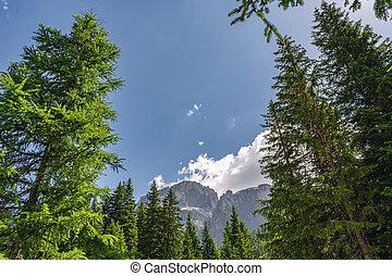 montagne, rocheux, scénique, élevé, forêt, paysage