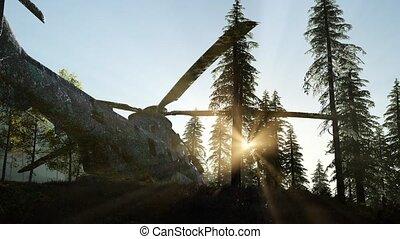 montagne, rouillé, vieux, forêt, hélicoptère militaire, levers de soleil