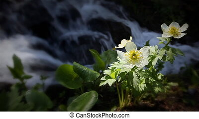 montagne, wildflowers, (1202), ruisseau