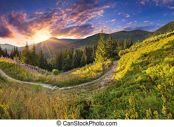montagnes, été, paysage, flowers., rose, beau