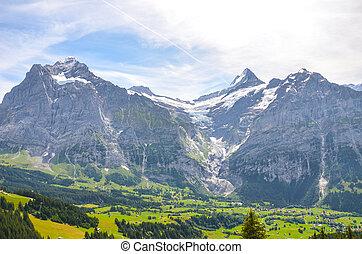 montagnes, alpin, autour de, entouré, paysage, neige-couvert, pris, forêt, bachalpsee, piste, été, lake., switzerland., grindelwald, mener, village, vallée