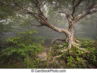 montagnes bleues, rocailleux, arête, spooky, conte fées, nc, arbre, terrifiant, fantasme, asheville, brouillard, forêt, appalachian, nord, jardins, paysage, caroline