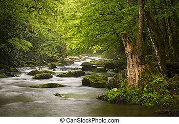 montagnes, grand, délassant, nature, enfumé, parc, gatlinburg, tn, paisible, brumeux, tremont, rivière, national, paysage, scenics
