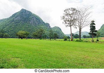 montagnes, herbe, arrière-plan vert, champ